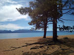 Two Trees and A Beach