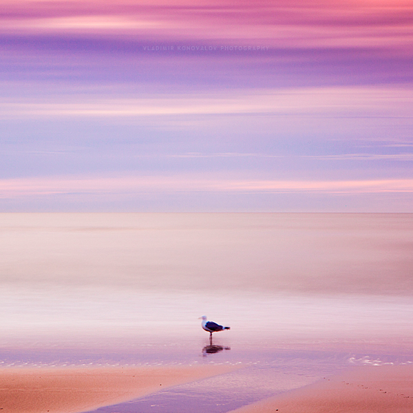 Steadfast Seagull by ~soulofautumn87