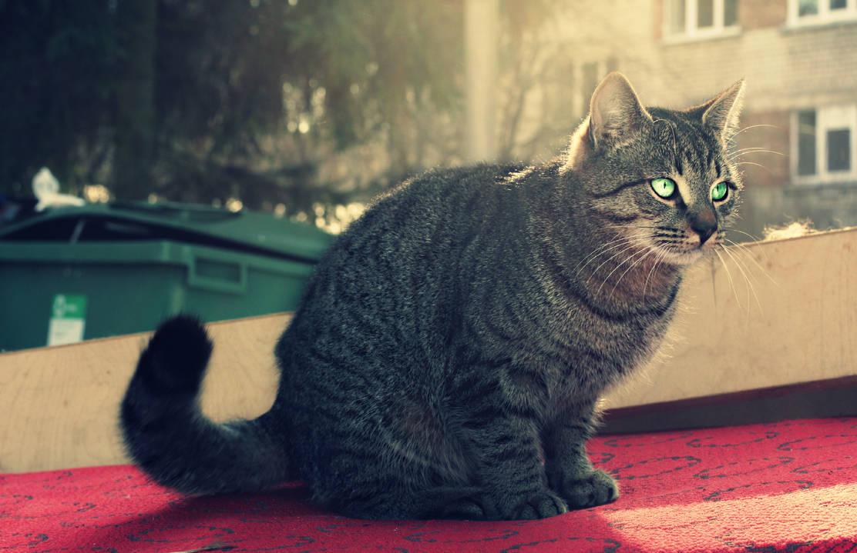 Dreamy cat!