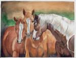 Sharpie, Dottie, and Lea Horse Portrait by Shadowind