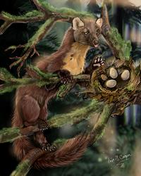 European Pine Martin by Shadowind