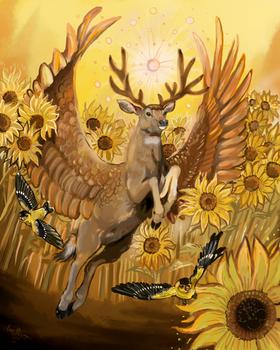 Feilds of Gold MuleDeer Fauna Focus