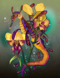 Weedy Seadragon with Orchids