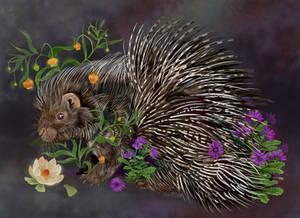 Crested Porcupine Bouquet