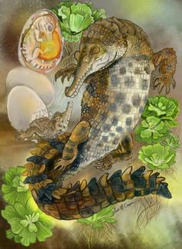 Slender Snouted Crocdile