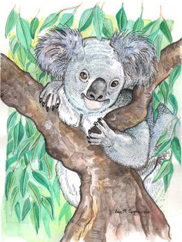 Koala Mixed Medium