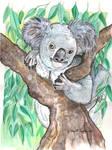 Koala Mixed Medium