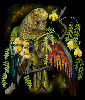 New Zealand Mountain Parrot Kea