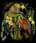 New Zealand Mountain Parrot Kea