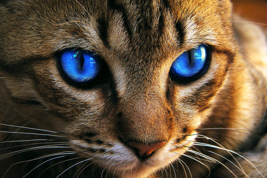diamond naturals cat food