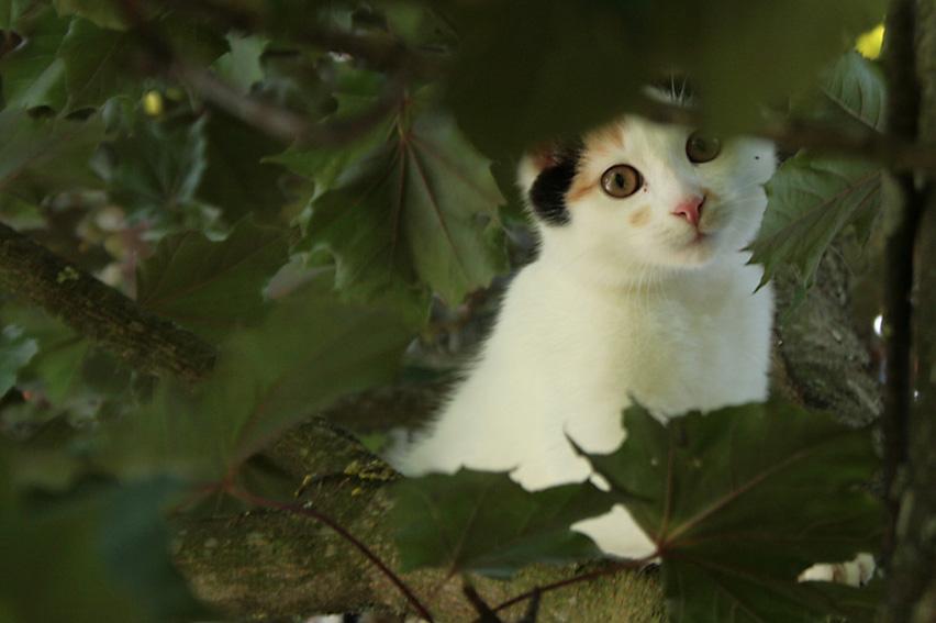 http://fc04.deviantart.net/fs31/f/2008/217/6/5/Cat_in_tree_by_griawig.jpg