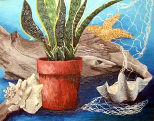 Still Life with Seashells by Shadoweddancer