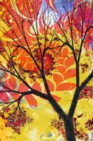 Autumn Turning by Shadoweddancer