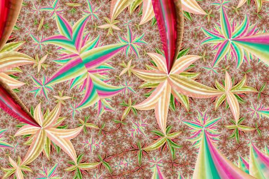 Spider Plants from Wonderland