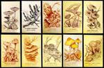 Mushroom collection #1
