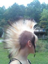 My chelsea-hawk