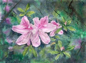Azaelas Flower Watercolor Art
