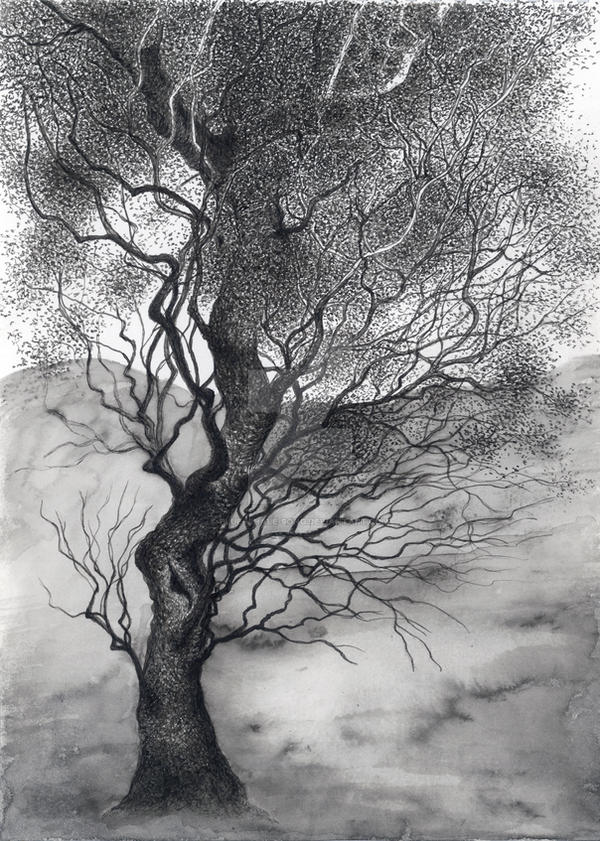 Mystic Tree 02 by Blue-Whale-Song