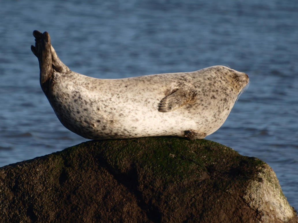 Seals just wanna have fun by da-phil