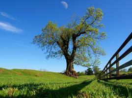 Tree... by da-phil