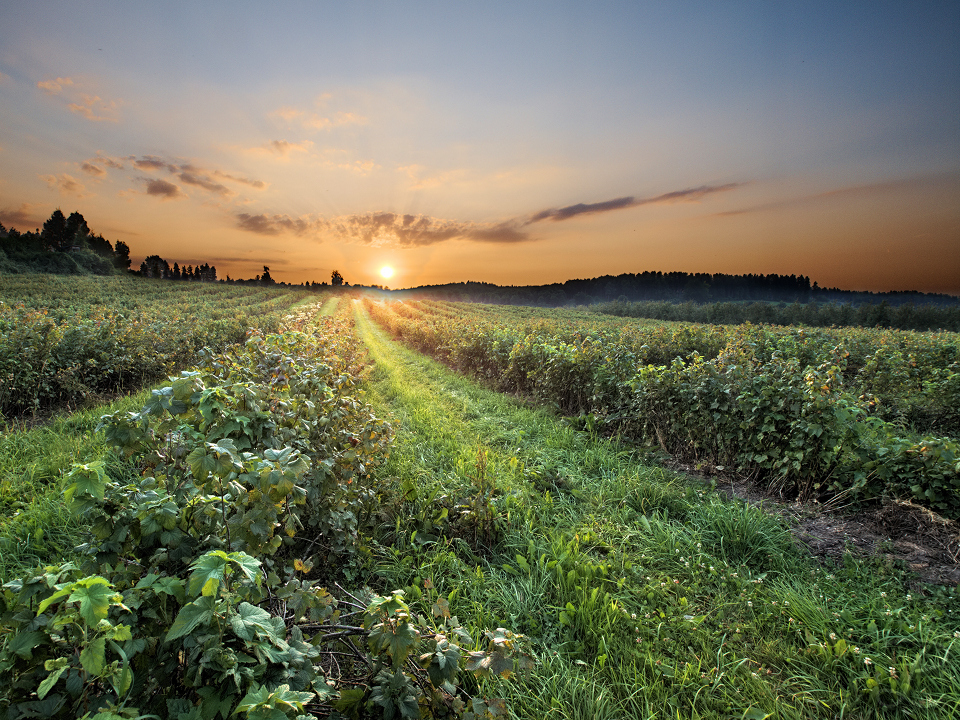 Summer Sunset by da-phil