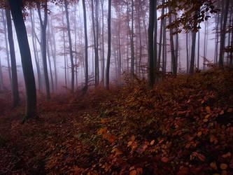 Mysterious Fog by da-phil