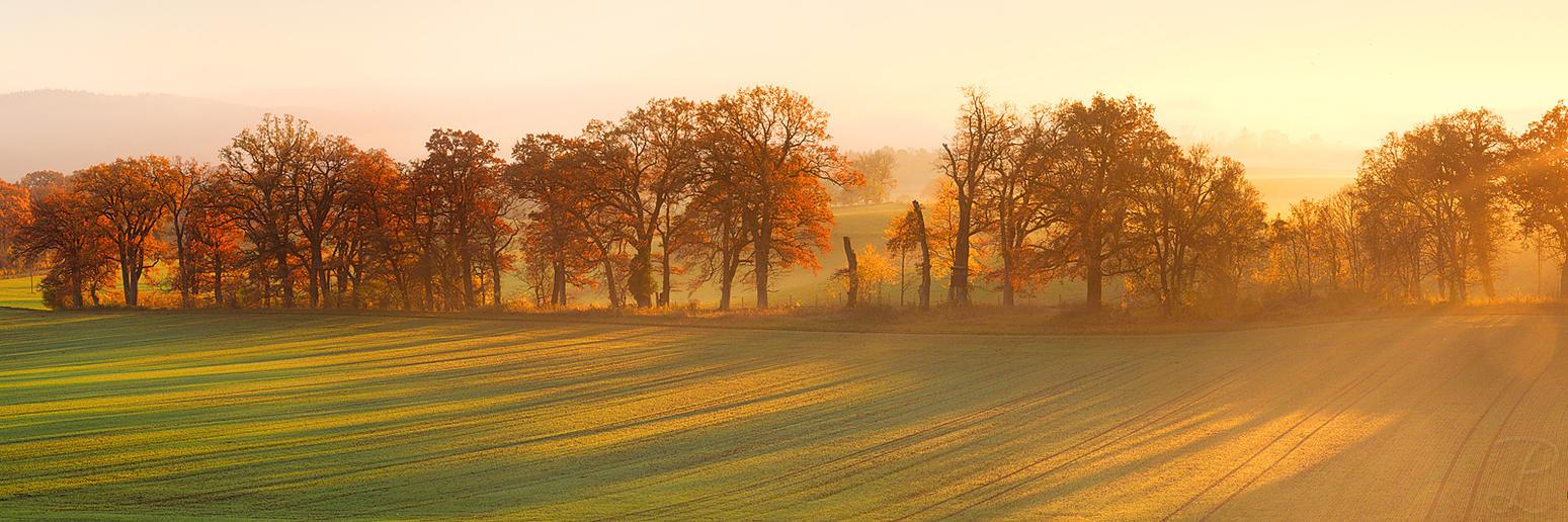 Golden Autumn by da-phil