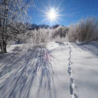 Winter Wonderland by da-phil
