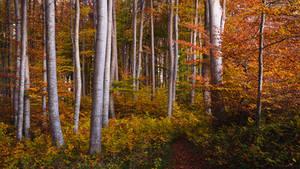 Fading Autumn