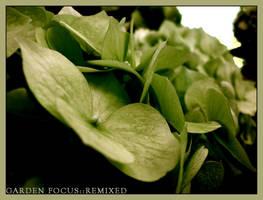 Garden Focus::Remixed by unforgiven86