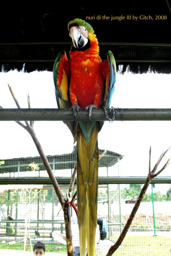 Burung Nuri Iii By Gitchgitch On Deviantart