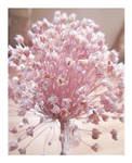 Sweet Pink Dried Flowers by Lissou-photography