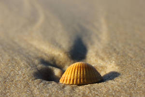 Lost Shell by Lissou-photography