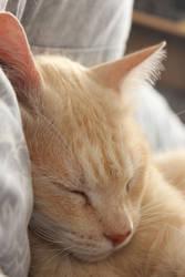 Sleeping Like a Baby-2 by Lissou-photography