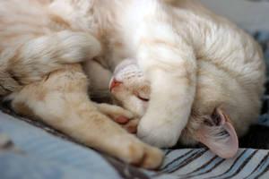 Sleeping Like a Baby-10 by Lissou-photography