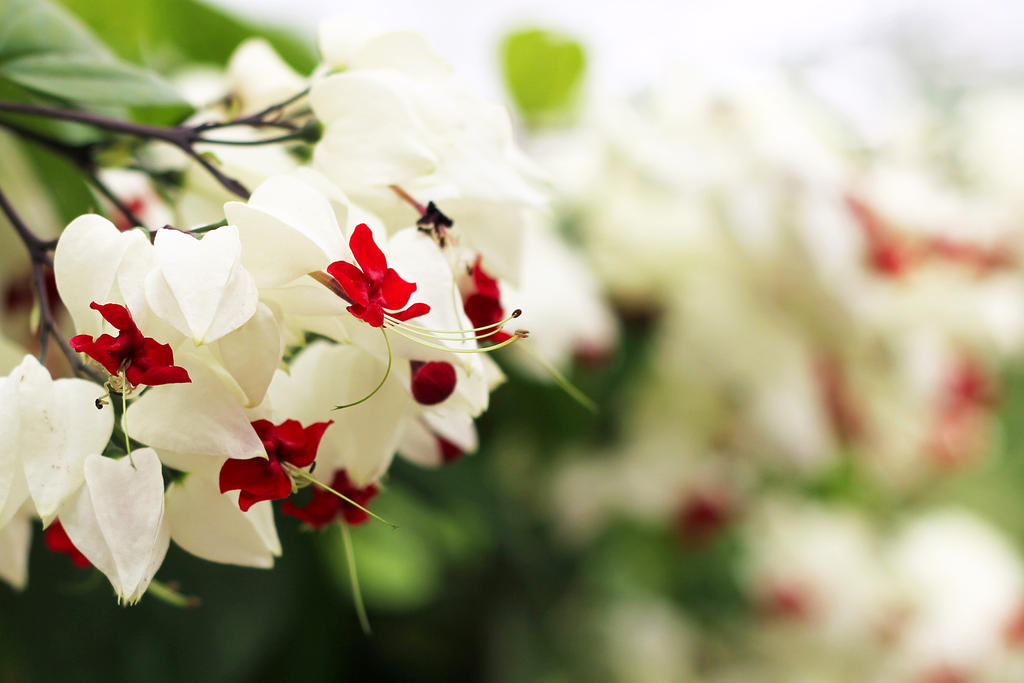 Snow white flowers by lissou photography on deviantart snow white flowers by lissou photography mightylinksfo