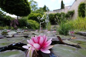 Pink Waterlily by Lissou-photography