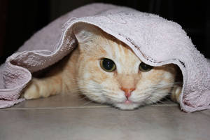 Playing and Hiding into Towel by Lissou-photography
