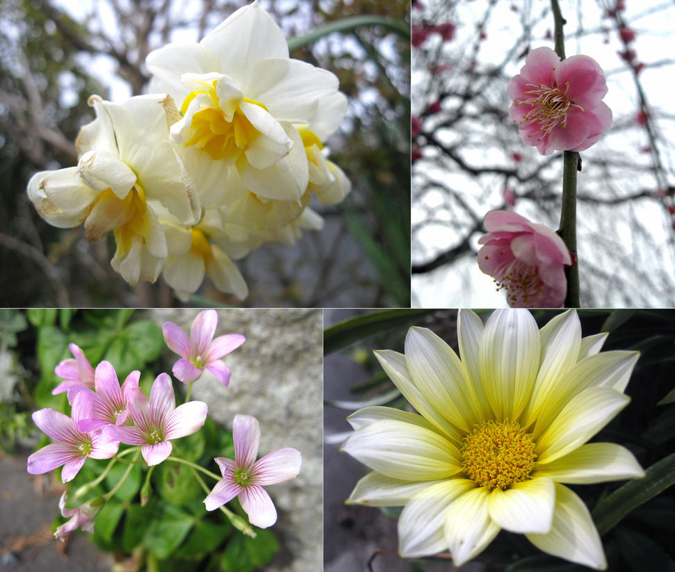 Various Flower In Japan By Lissou Photography On Deviantart
