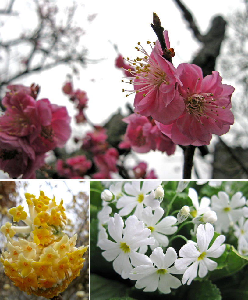 Various Flower In Japan 2 By Lissou Photography On Deviantart