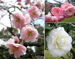 Various Flowers in Japan