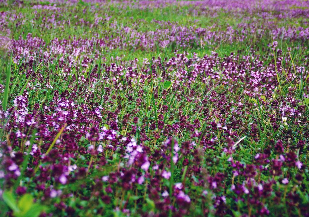 Purple Field by 17ElaineMichelle17