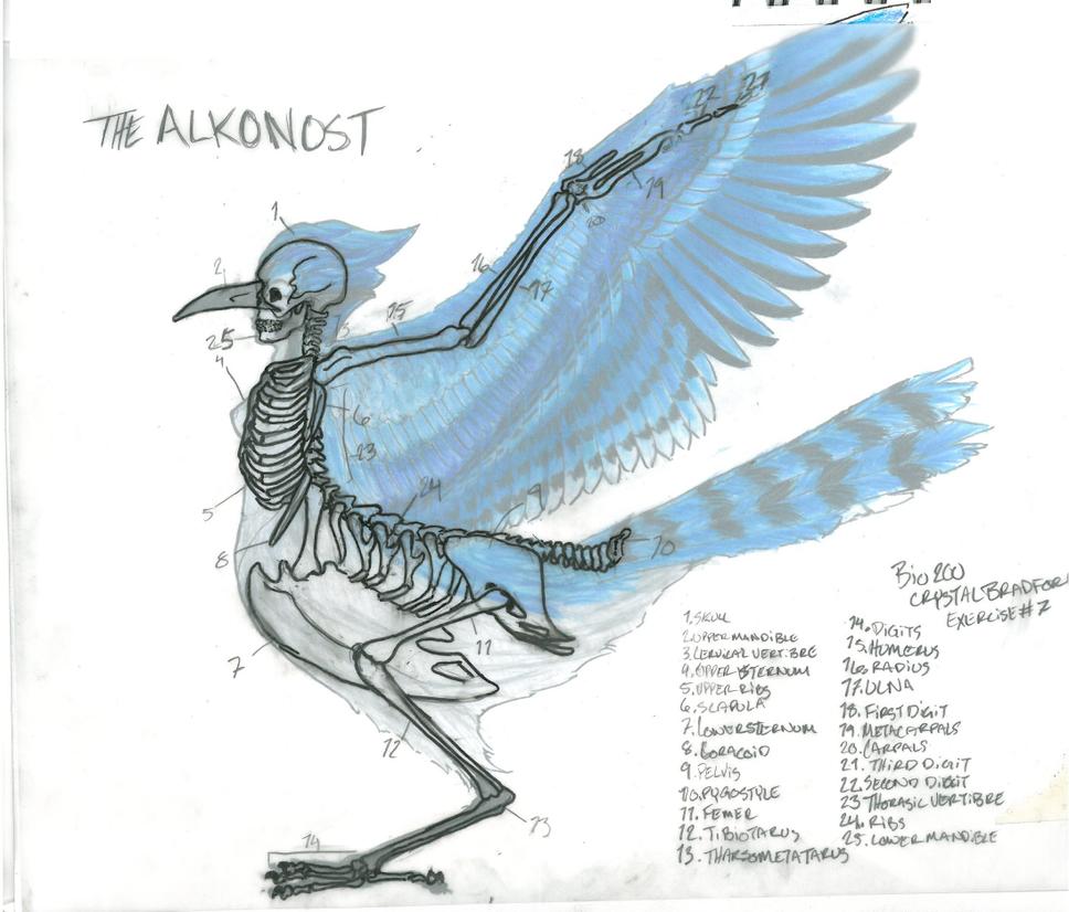 The Mythical Thunderbird  Sasquatch Chronicles