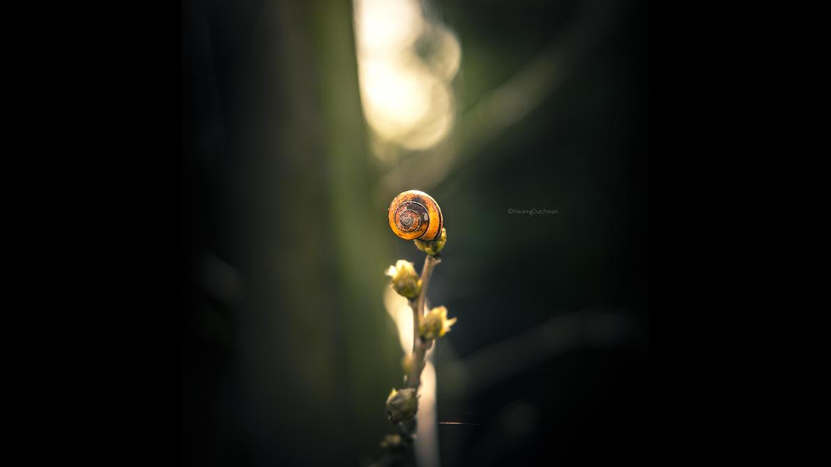 Snailing away by HackingDutchman