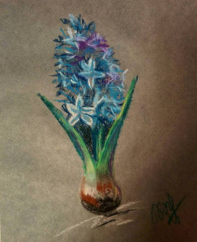 Hyacinth in soft pastels