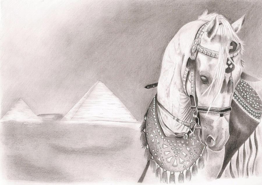 Arabian Horse Pencil Drawings Arabian Horse Drawing Arabian