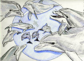 Dolphins by autumnalangel