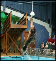 Sealion Leap