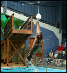 Sealion Leap