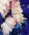 Flower. by LizAlasca
